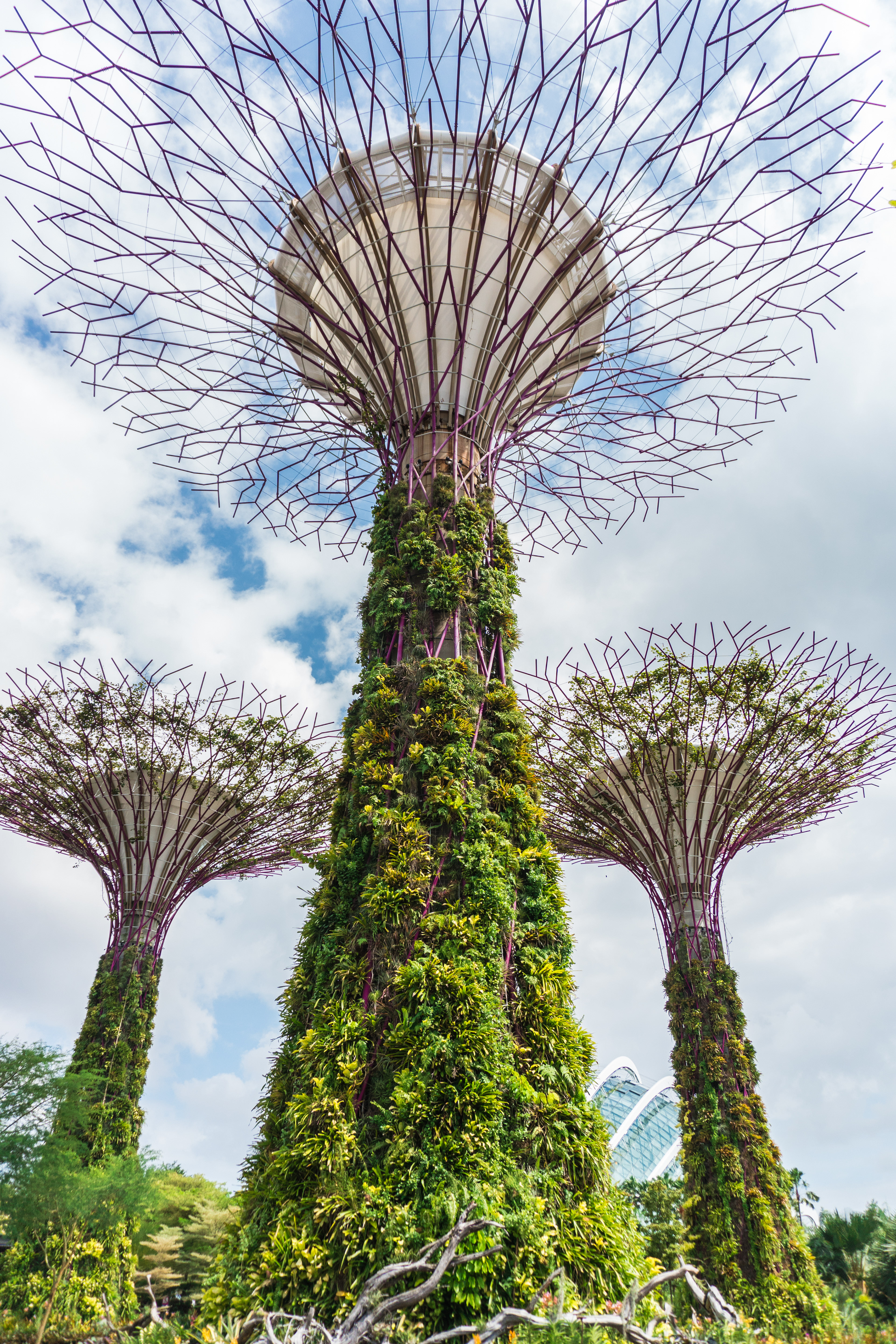singapore from a garden city to a city in a garden the stated aim is to raise the quality of life by enhancing greenery and flora in the city - Garden By The Bay Bar